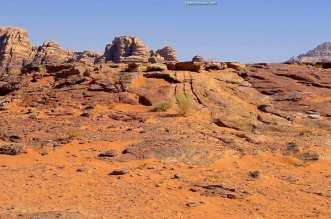 Bedouins of The Red Desert