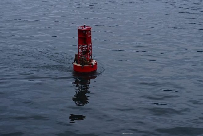 "Photo of the day ~ ""Seals playing on the Buoy in Alaska"""