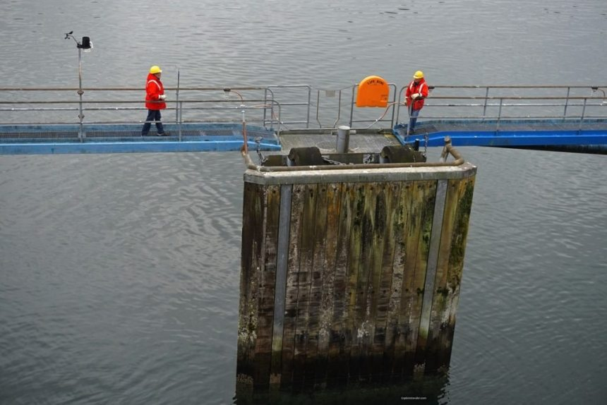 alaska-preparing-to-dock-in-petersburgs-shallow-harbor-in-alaska-photo-of-the-day
