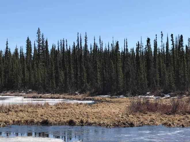Alaska Hiking Blog