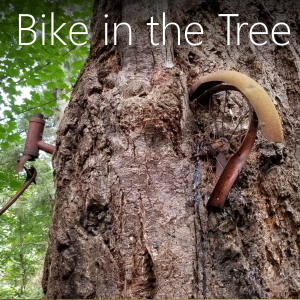The bike in the tree on Vashon Island Washington where to find it and other information.