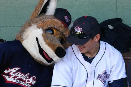 Wenatchee AppleSox Coyote hanging out with the players. Credit: Gabe Mercer, Wenatchee AppleSox. Used with permission.