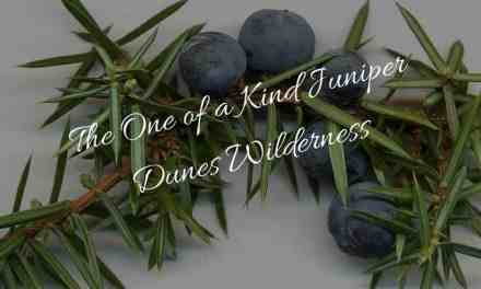 The One of a Kind Juniper Dunes Wilderness