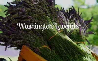 Washington Lavender