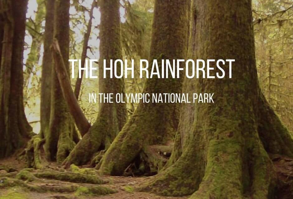The Hoh Rain Forest go and explore