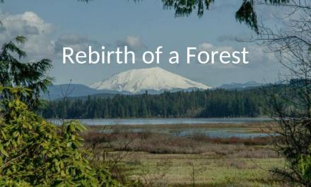 Rebirth of a Forest