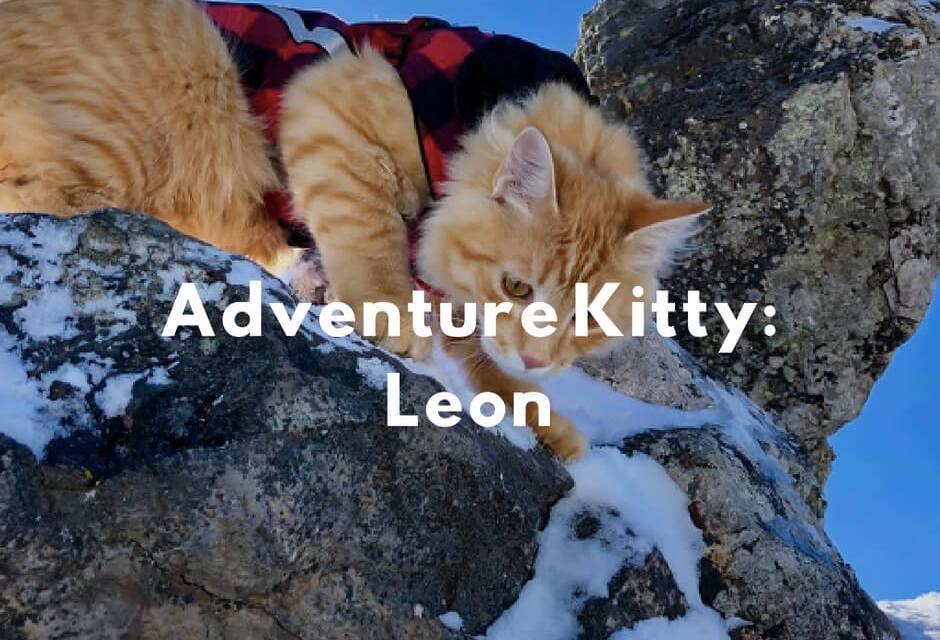 Adventure Kitty: Leon