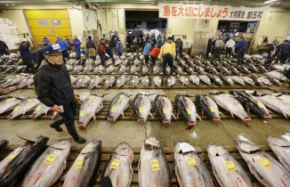 Tuna in Tsukiji Market