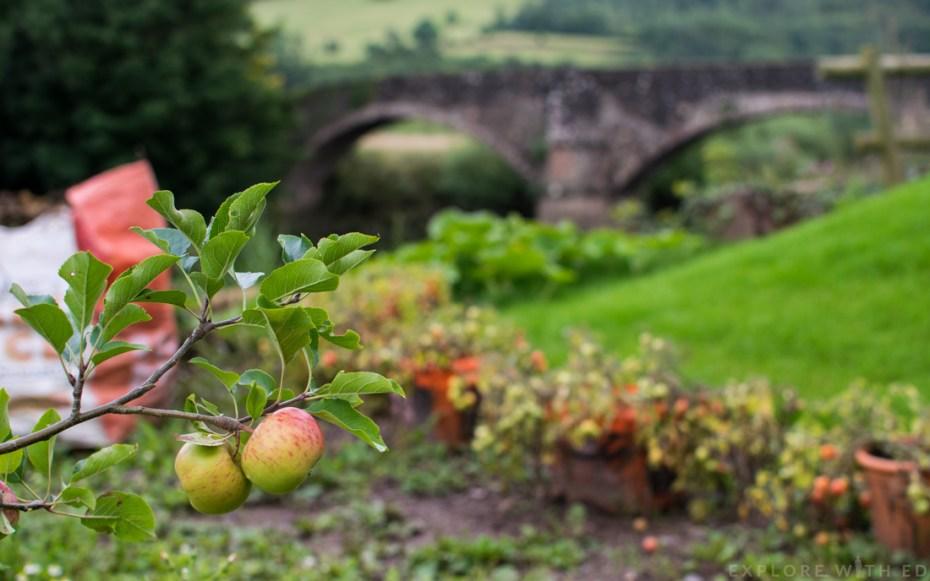 Apple tree, Kitchen Garden, Newbridge on Usk