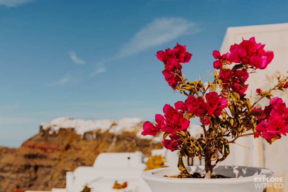 A pop of colour from the plant pots against the white washed buildings of Santorini