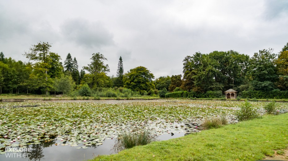 The lakes and lily ponds at Windsor Great Park