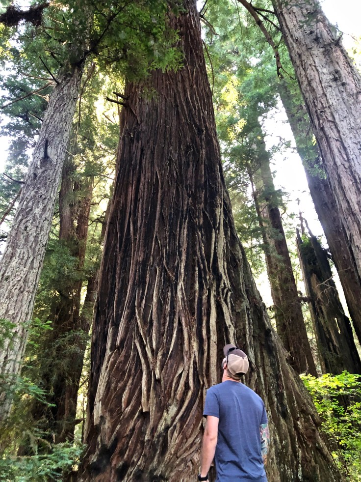 Redwoods National Park onThe Epic Western US and Canadian Road Trip