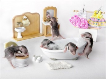 Still-Life-with-Hamsters-12-600x452