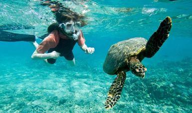snorkeling-turtle