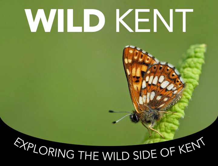 Wild Kent