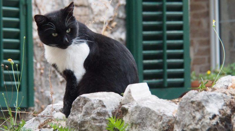 Montenegro – Bullen & ein fettes Kätzchen