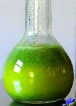 tarragon oil 2