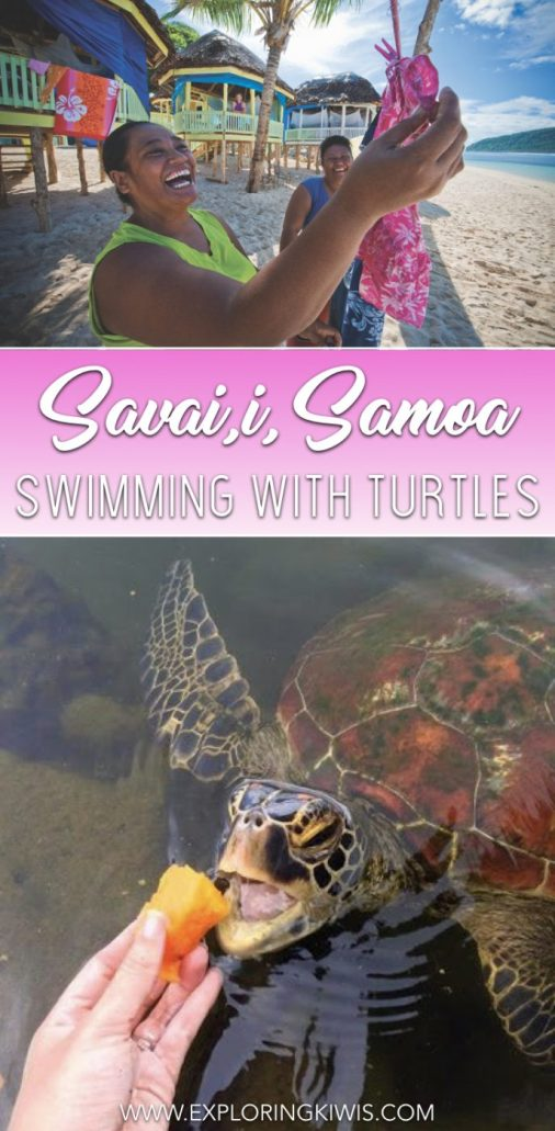 Swimming with the turtles on Savai'i, Samoa could have been a dream. In reality though, we can't recommend it. This post outlines exactly why you should visit this island paradise but why you should avoid a visit to the captive turtles.