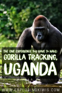 Gorilla Tracking in Uganda was a bucket list moment for us. Get the answers to all of your questions here!