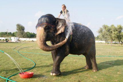 elefantastic india review