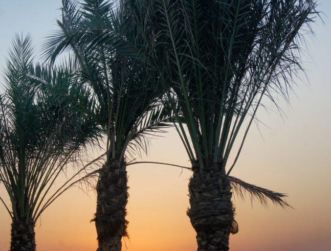 Radisson Blu Sohar Oman review