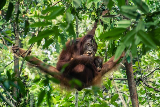 Bucket List Bobo and Chichi Borneo
