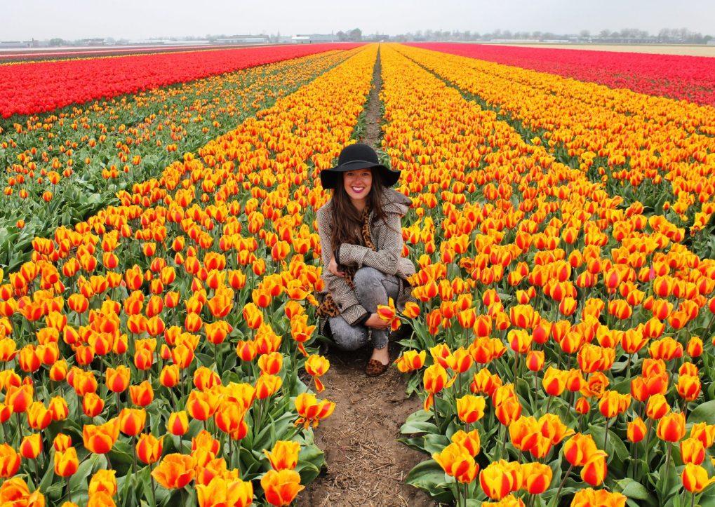 Sarah S Exploring Kiwis tulips