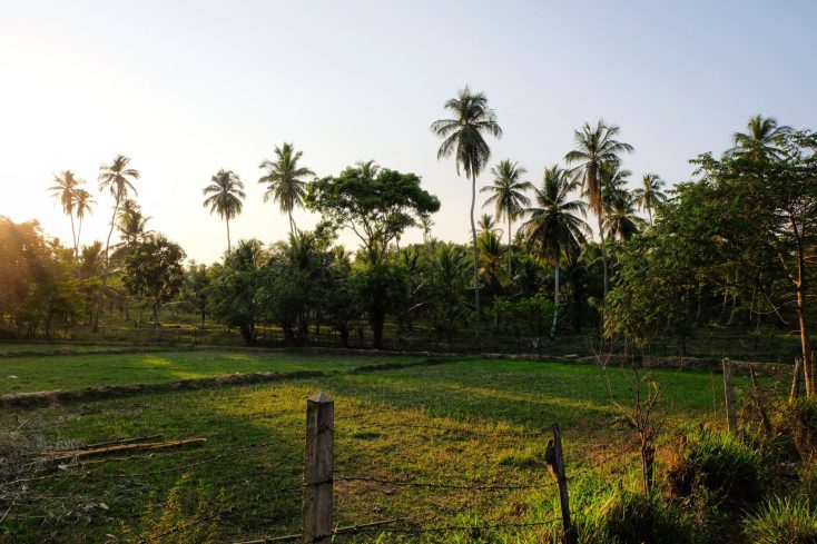 Horathapola Estate Sri Lanka review Red Dot Tours