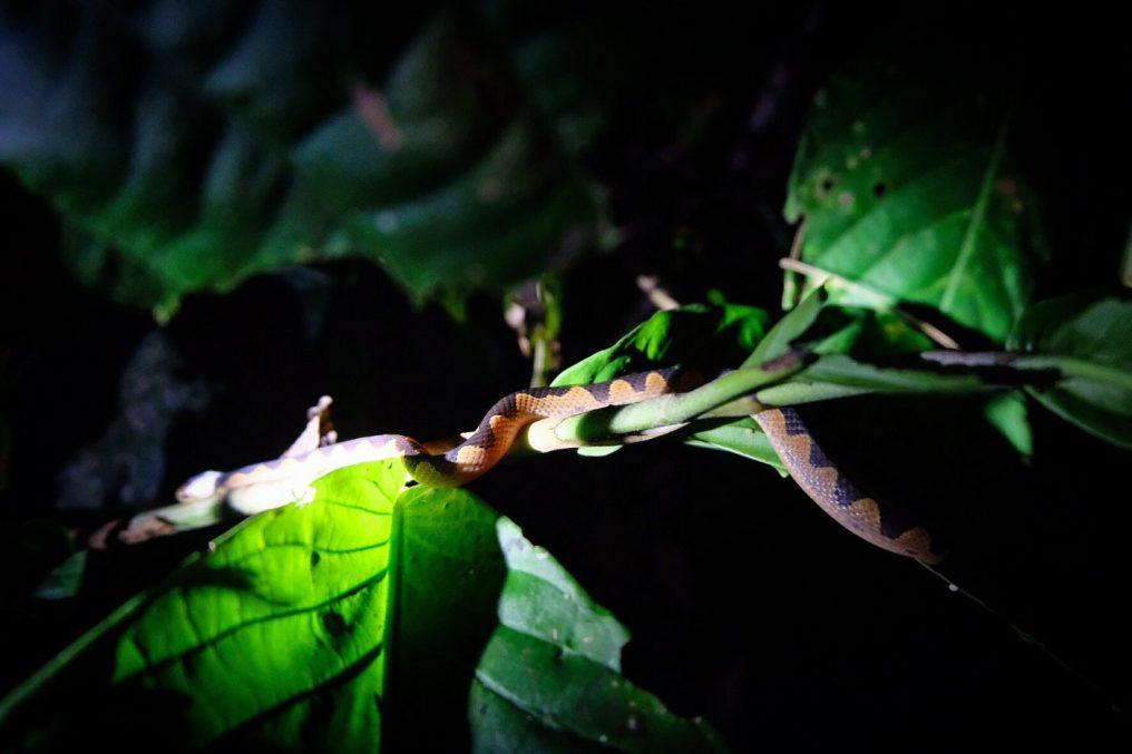 Peru amazon snake