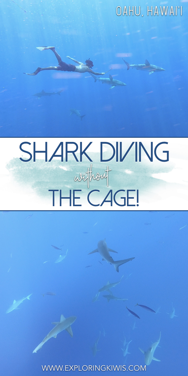Shark diving in Hawaii without the cage - it\'s safe, fun and a must-do on your vacation!  One Ocean Diving protect sharks by educating people as they snorkel in the wild, cageless.  One of the best things we did whilst in the islands!