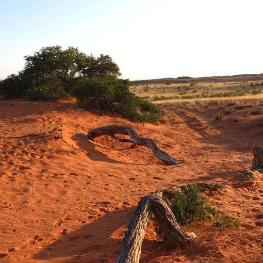 3.The Dunes 2