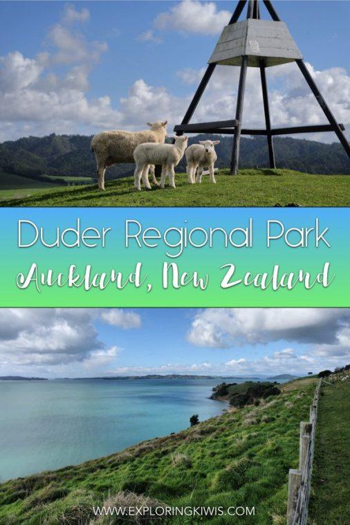 Duder Regional Park | Hiking | New Zealand | Auckland | Farmland | Beach views | Auckland Itinerary | Auckland Must-See #travel #auckland #hiking