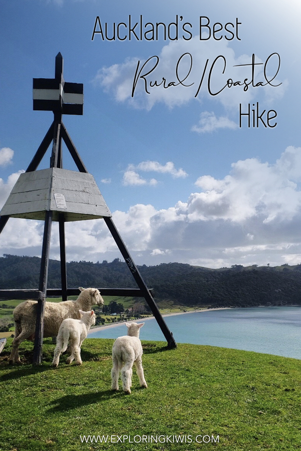 Duder Regional Park is home to the best rural/coastal hike in Auckland.  A easy trail, travelers are treated to spectacular views out over the turquoise sea and of local farmland.  An absolute must if you have a spare day in Auckland, New Zealand!  #auckland #travel #newzealand #hiking