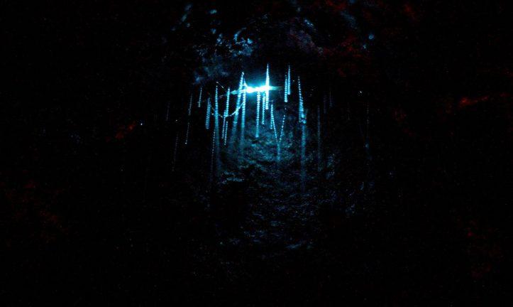 1600px-Nz_glowworm