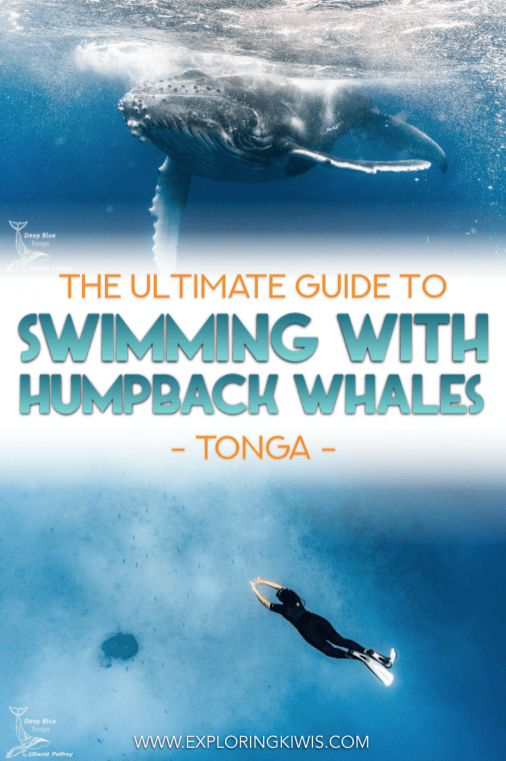 Swimming with whales in Tonga is the pinnacle of our bucket list! These incredible animals are curious, graceful and beyond huge. Check out our guide to find the best places you can swim with humpbacks around the world and get all the information to plan your whale swim.