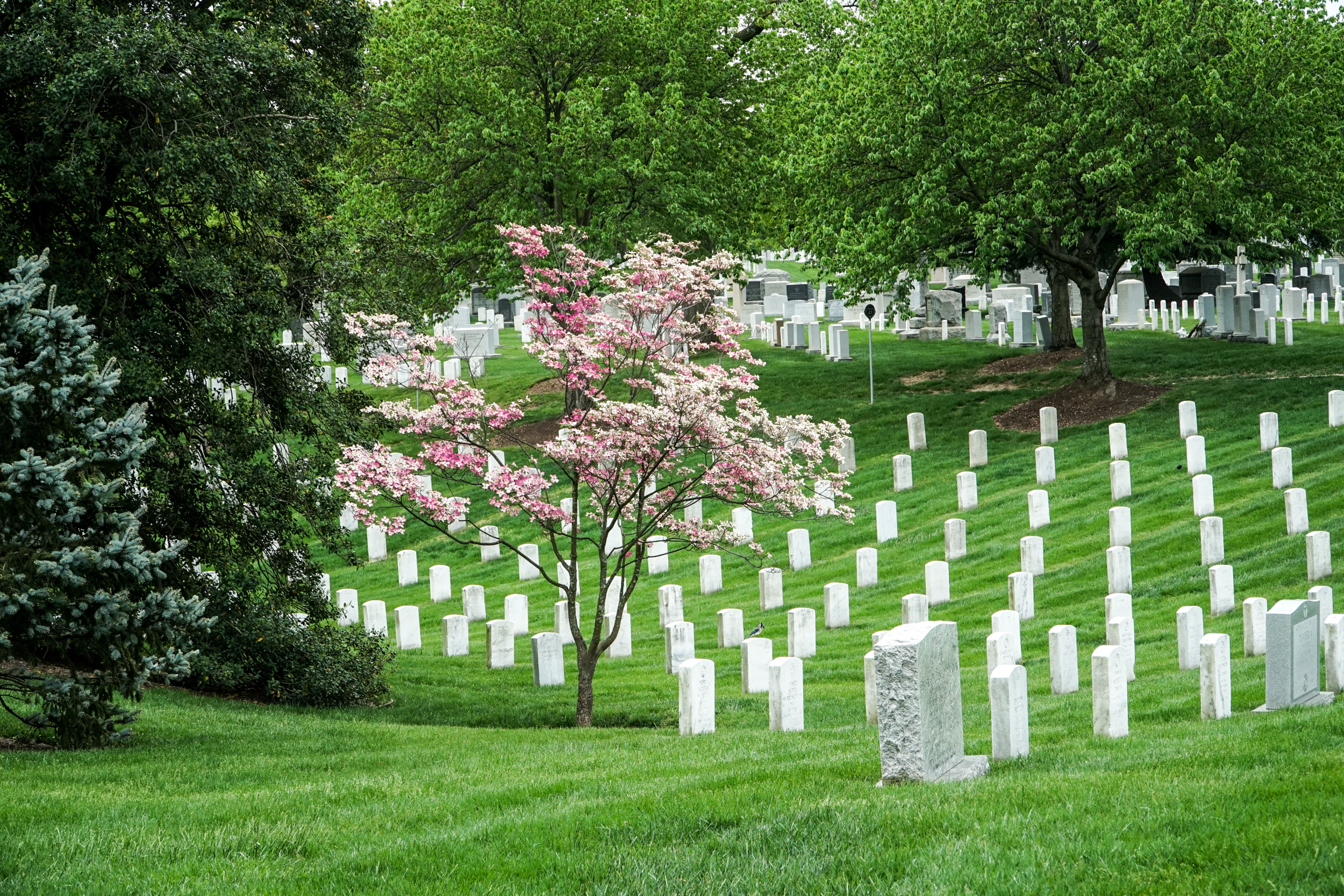 Arlington National Cemetery And The Honor Flights