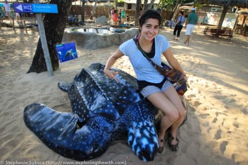 Massive Leatherback Sea Turtle TAMAR Prai du Forte Brazil Travel Adventure Conservation South America