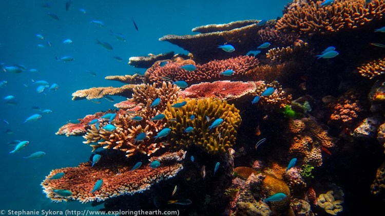 Australia, Great Barrier Reef, Queensland, fish, coral, underwater, photography, colourful, hard coral, soft coral, types of coral, adventure, scuba diving, snorkeling, travel, GBR, oceanography, geology, padi, scuba, swin, ocean, map, location, blog