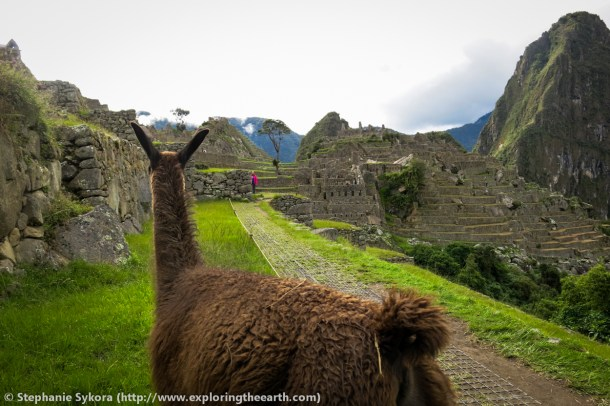 Peru, South America, Machu, Picchu, geology, travel, blog, adventure, hiking, exploring, earth, science, rocks, nature, geomorphology, Inca, Andes, mountains, culture, civilization, lost city, city ruins, places to visit, fault, earthquake, granite, Inca trail, what to do, visit, Huayna Picchu, Cerro Machu Picchu, photography, cusco, llama