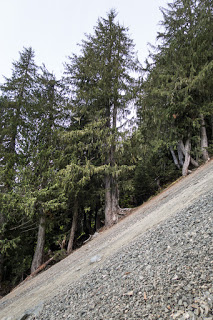 Scree slope leading to Adam Ridge and connects to Mount Schoen