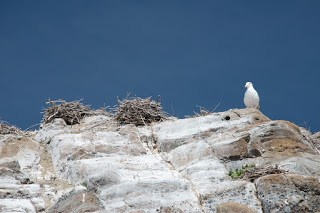 nesting birds on the heights of Mendarte Island
