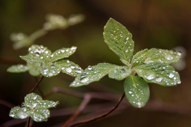 Water drops resting on the leaves of every plant along our route.up Steamboat Mountain
