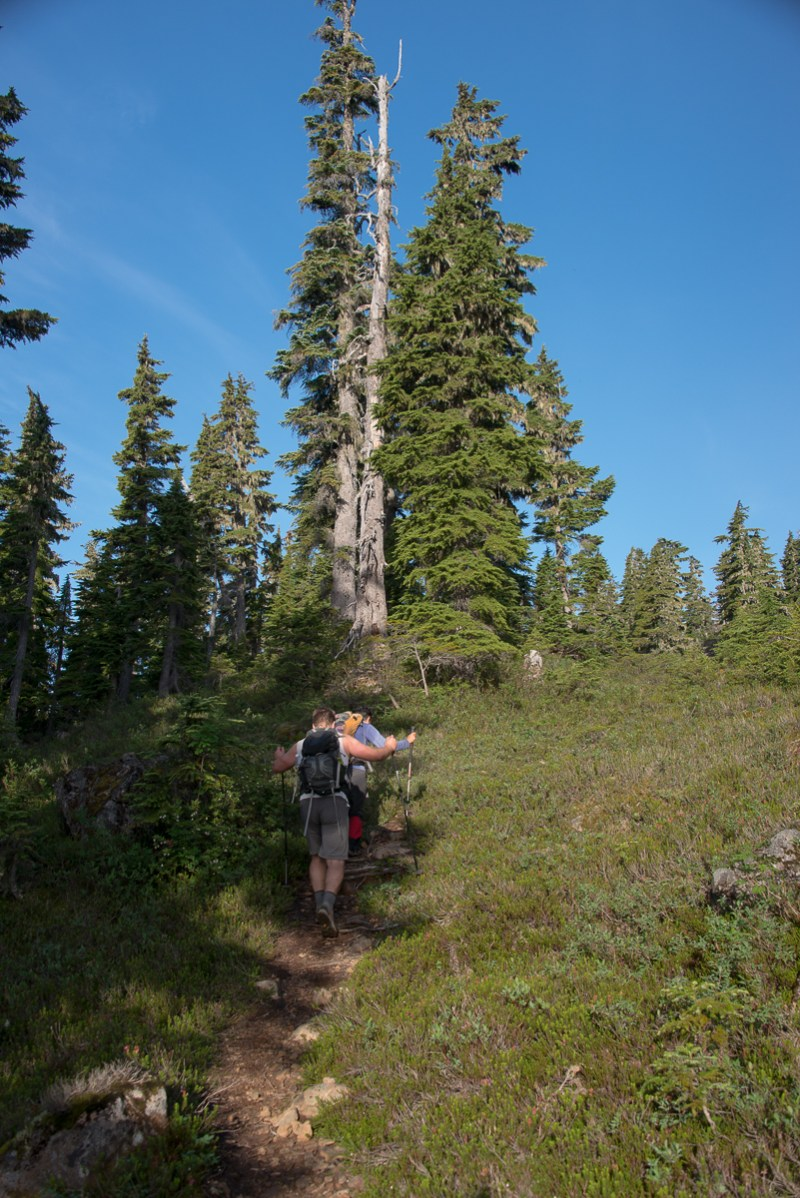 Phil and Mary climbing up out of the oldgrowth on our way along the Frog Ponds Route, on our way to Comox Glacier