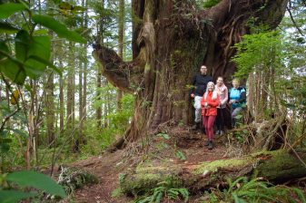 big tree trail, hiking on Meares Island, in Tofino inlet off the coast of Vancouver Island