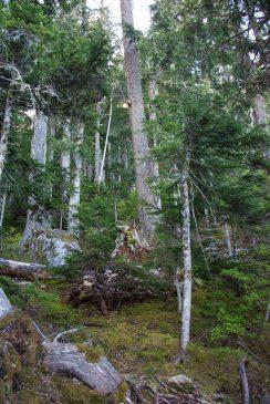 hiking, mountaineering, Vancouver Island hiking, Mount Heber