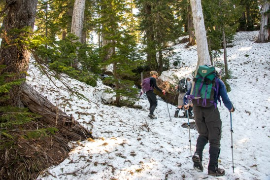 the hiking route to Mount Judson in Strathcona Park