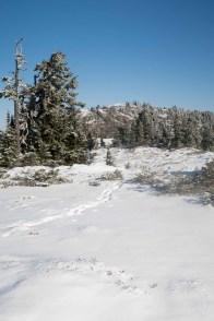 The long rolling apline ridge to Genesis Mountain