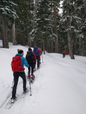 snowshoeing to Mount Elma in Strathcona Park
