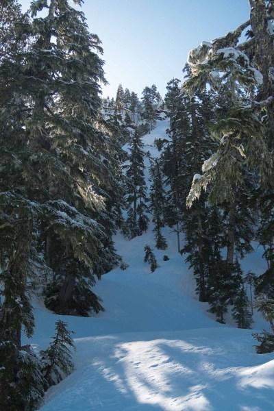 Big Baldy Mountain Through the trees and along the ridge