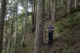 steep forested slope on Mount Sarai